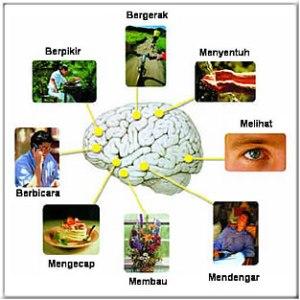 cara-kerja-otak