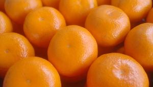 jeruk-lokam